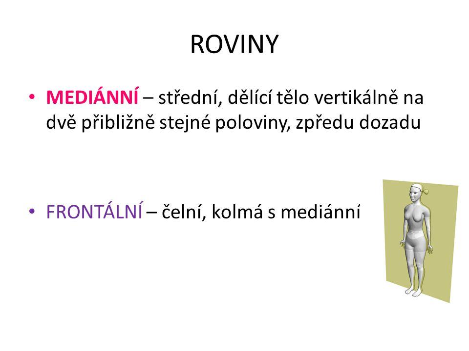 ROVINY MEDIÁNNÍ – střední, dělící tělo vertikálně na dvě přibližně stejné poloviny, zpředu dozadu.