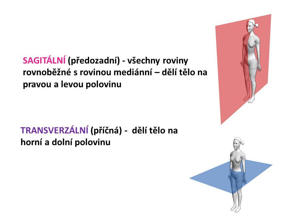 SAGITÁLNÍ (předozadní) - všechny roviny rovnoběžné s rovinou mediánní – dělí tělo na pravou a levou polovinu