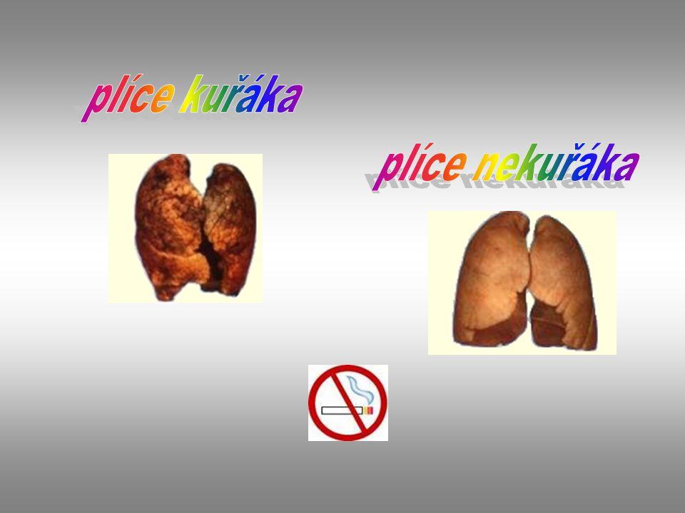 plíce kuřáka plíce nekuřáka