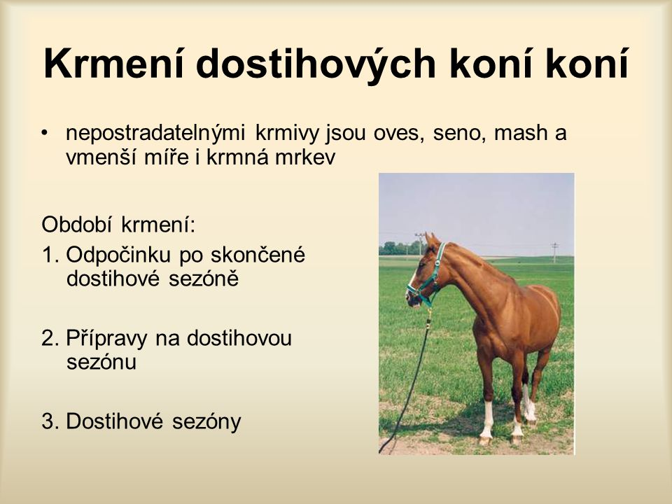 Krmení dostihových koní koní