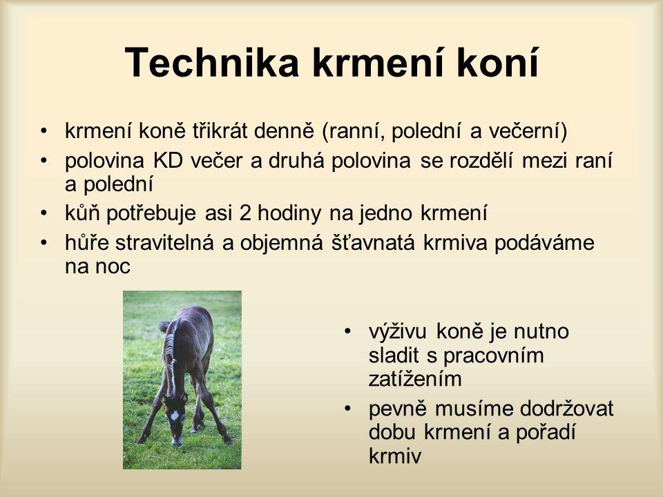 Technika krmení koní krmení koně třikrát denně (ranní, polední a večerní) polovina KD večer a druhá polovina se rozdělí mezi raní a polední.