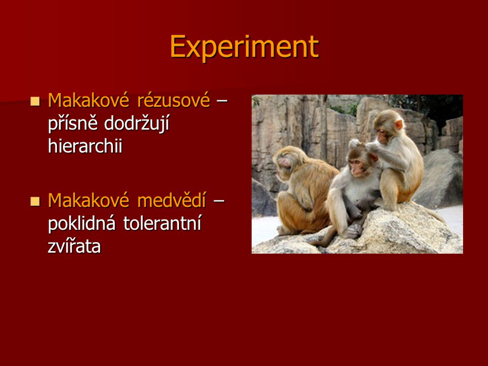 Experiment Makakové rézusové – přísně dodržují hierarchii