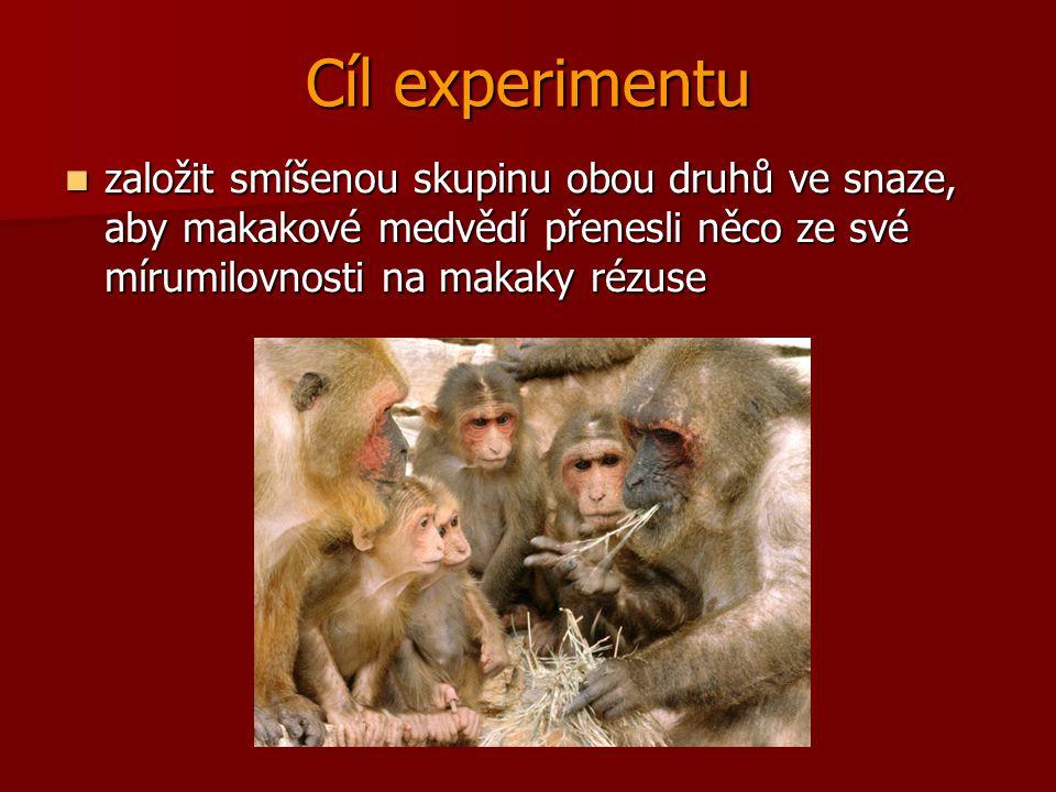 Cíl experimentu založit smíšenou skupinu obou druhů ve snaze, aby makakové medvědí přenesli něco ze své mírumilovnosti na makaky rézuse.