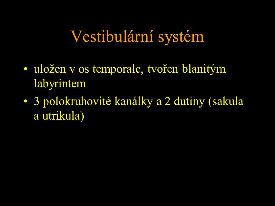 Vestibulární systém uložen v os temporale, tvořen blanitým labyrintem