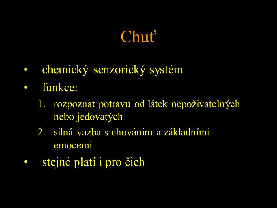 Chuť chemický senzorický systém funkce: stejné platí i pro čich