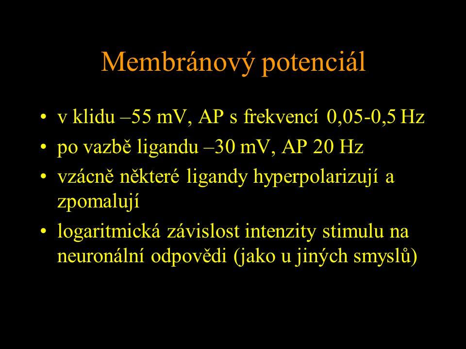 Membránový potenciál v klidu –55 mV, AP s frekvencí 0,05-0,5 Hz