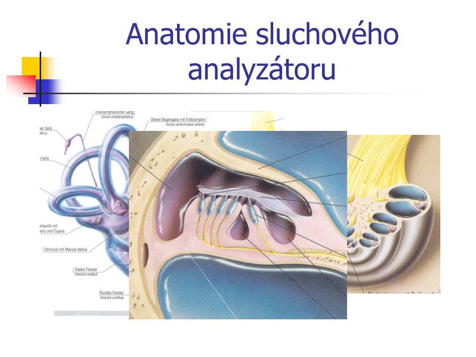 Anatomie sluchového analyzátoru