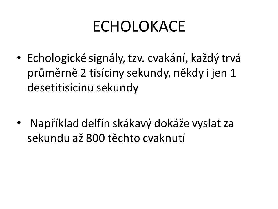 ECHOLOKACE Echologické signály, tzv. cvakání, každý trvá průměrně 2 tisíciny sekundy, někdy i jen 1 desetitisícinu sekundy.