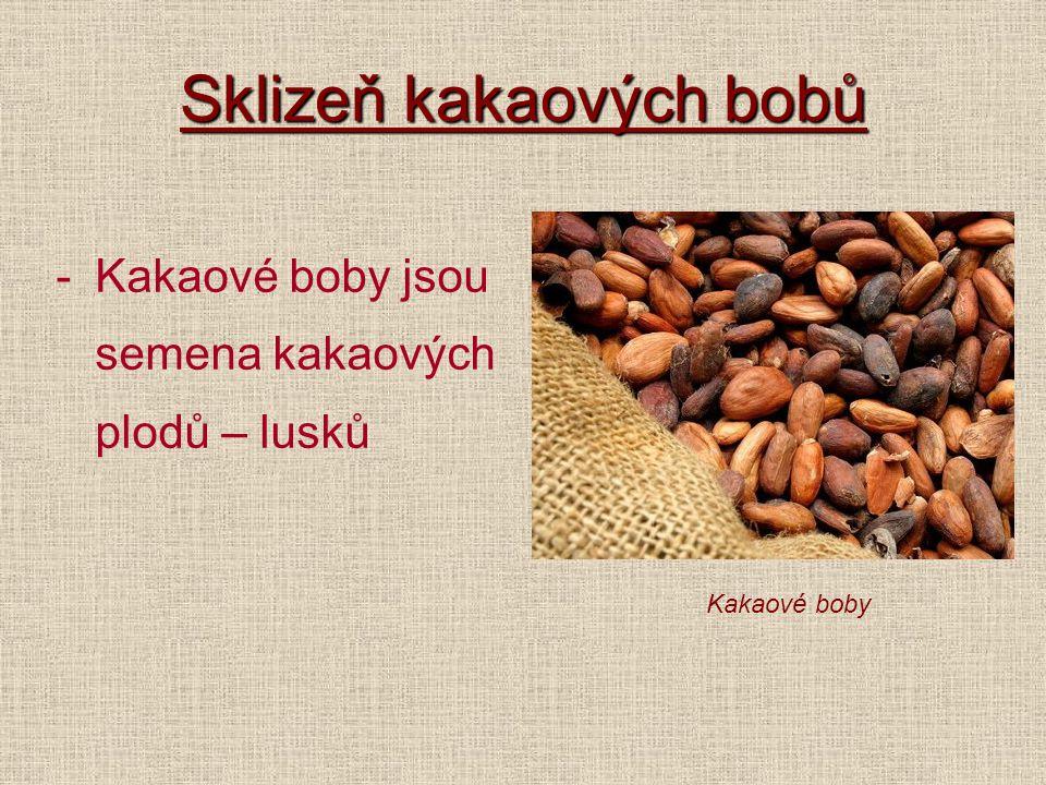 Sklizeň kakaových bobů