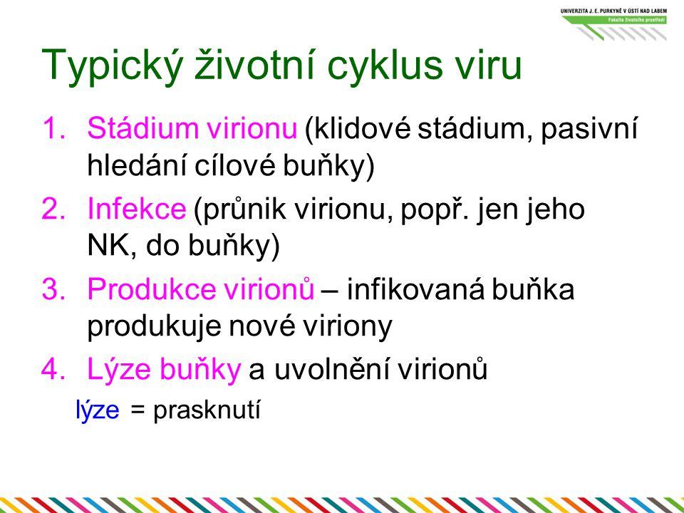 Typický životní cyklus viru