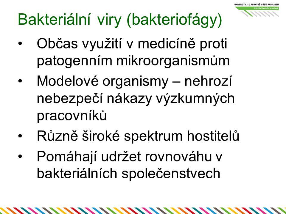 Bakteriální viry (bakteriofágy)