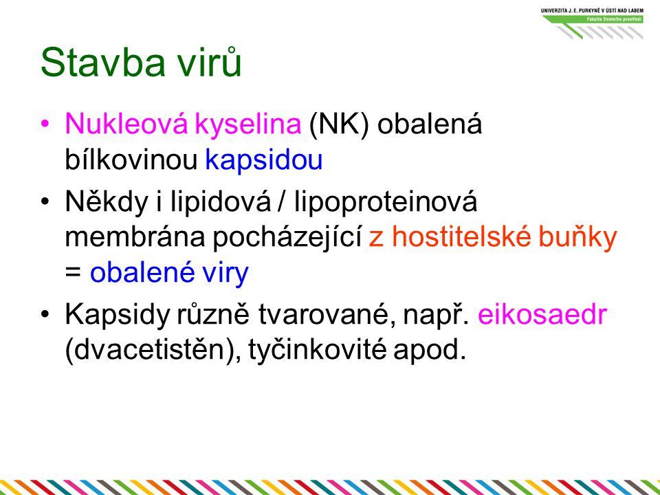 Stavba virů Nukleová kyselina (NK) obalená bílkovinou kapsidou