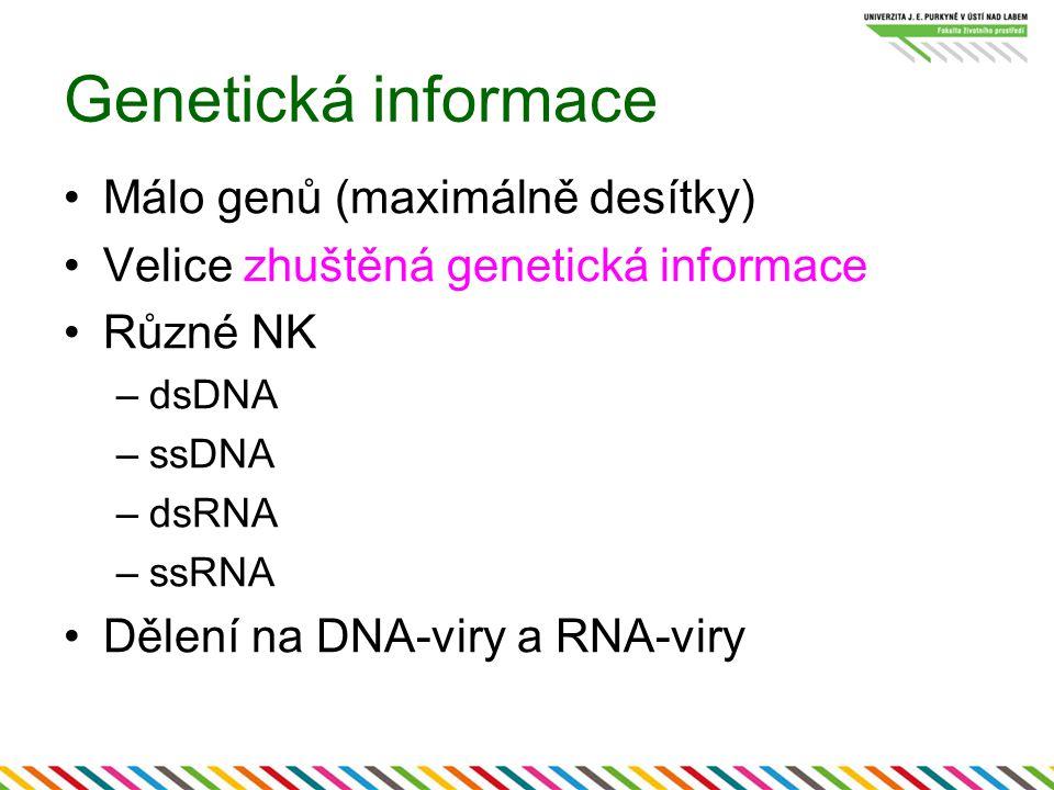 Genetická informace Málo genů (maximálně desítky)