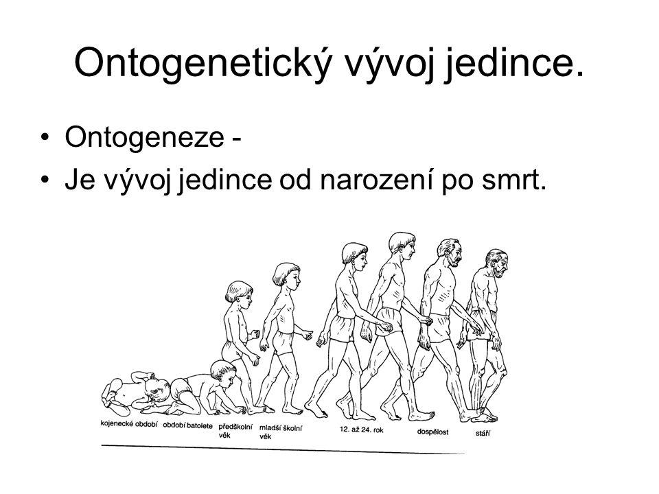 Ontogenetický vývoj jedince.