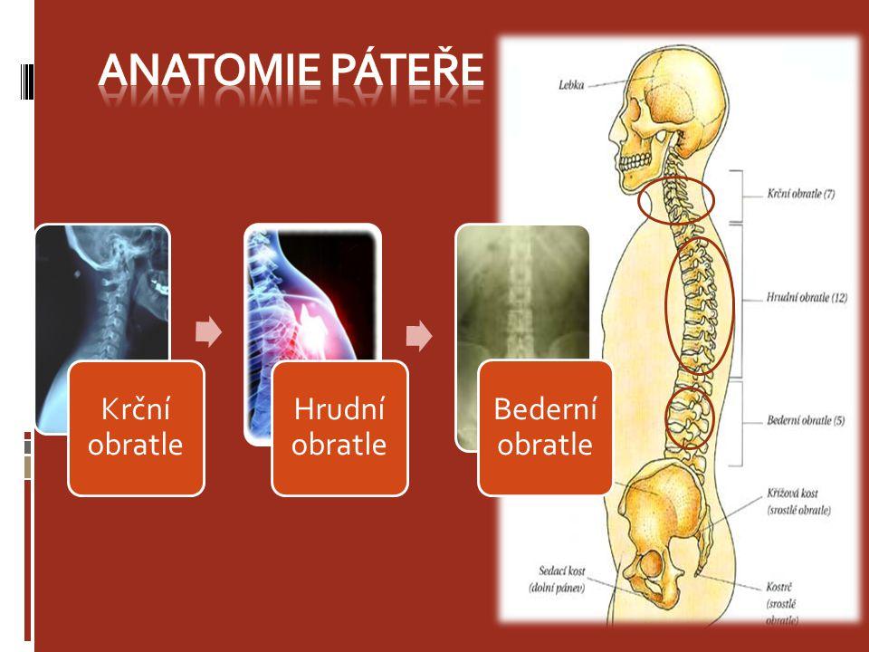 Anatomie páteře Krční obratle Hrudní obratle Bederní obratle