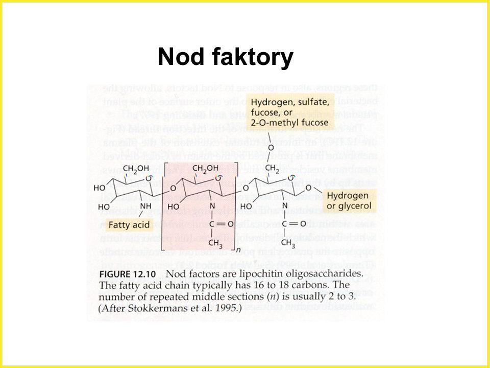 Nod faktory Nod faktory,oligosacharidy. 10
