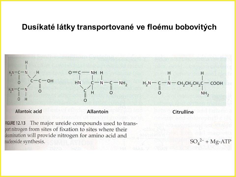 Dusíkaté látky transportované ve floému bobovitých