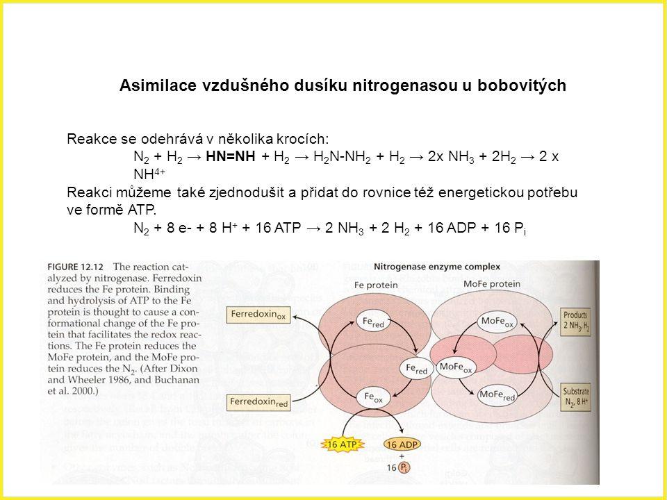 Asimilace vzdušného dusíku nitrogenasou u bobovitých