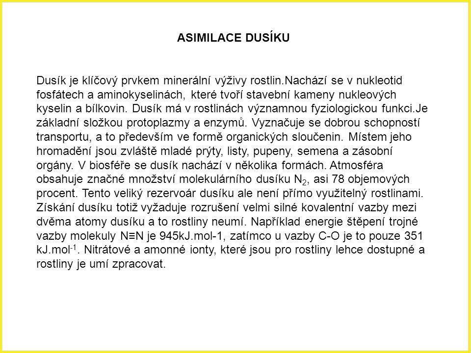 ASIMILACE DUSÍKU