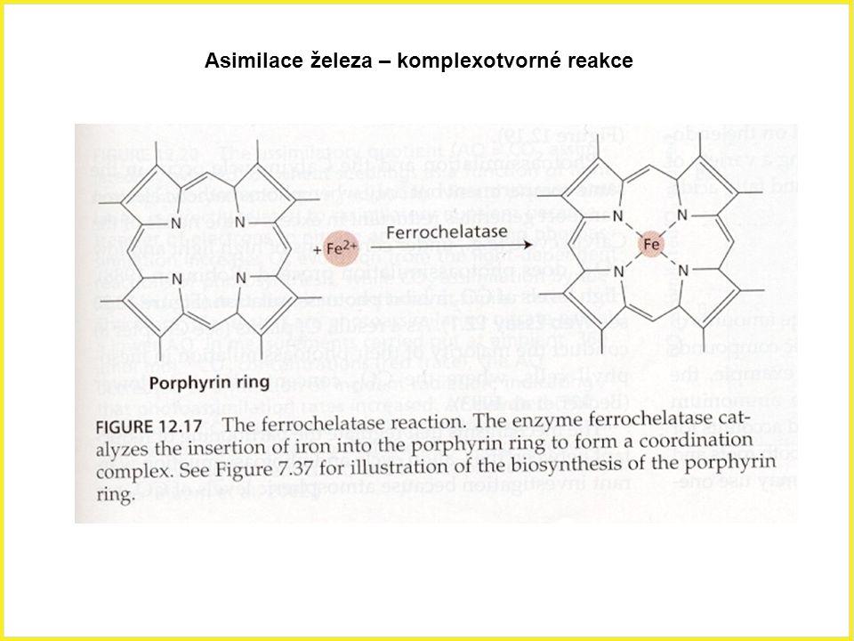 Asimilace železa – komplexotvorné reakce