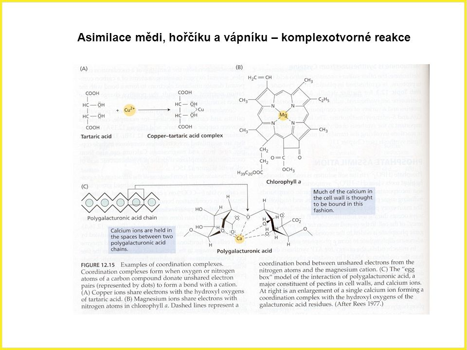 Asimilace mědi, hořčíku a vápníku – komplexotvorné reakce