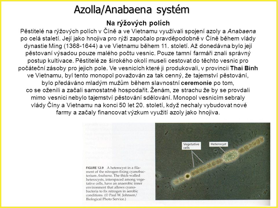 Azolla/Anabaena systém