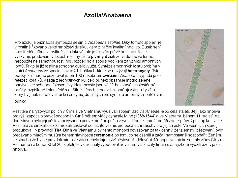 Azolla/Anabaena