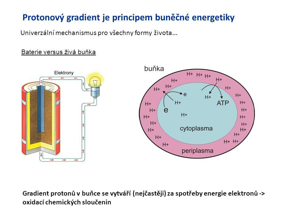 Protonový gradient je principem buněčné energetiky
