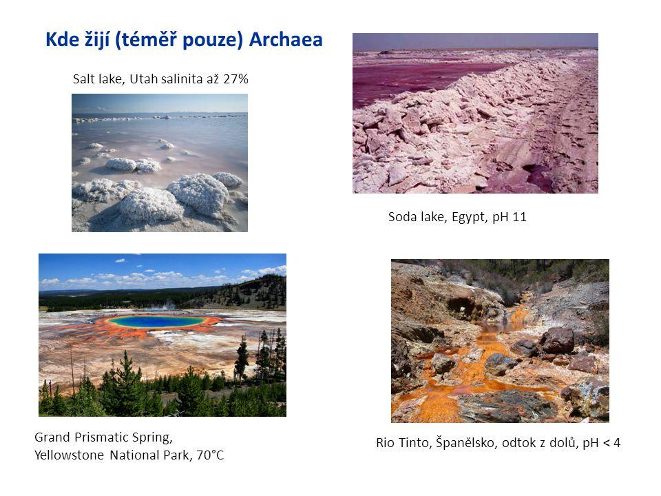 Kde žijí (téměř pouze) Archaea