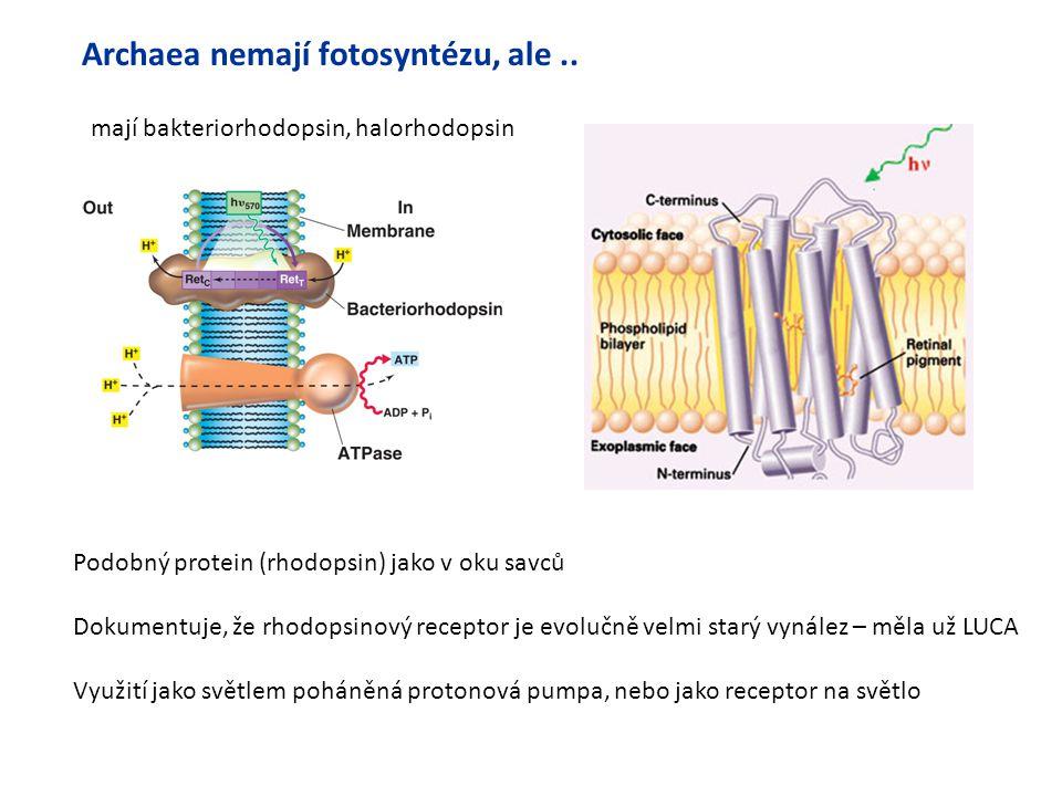 Archaea nemají fotosyntézu, ale ..