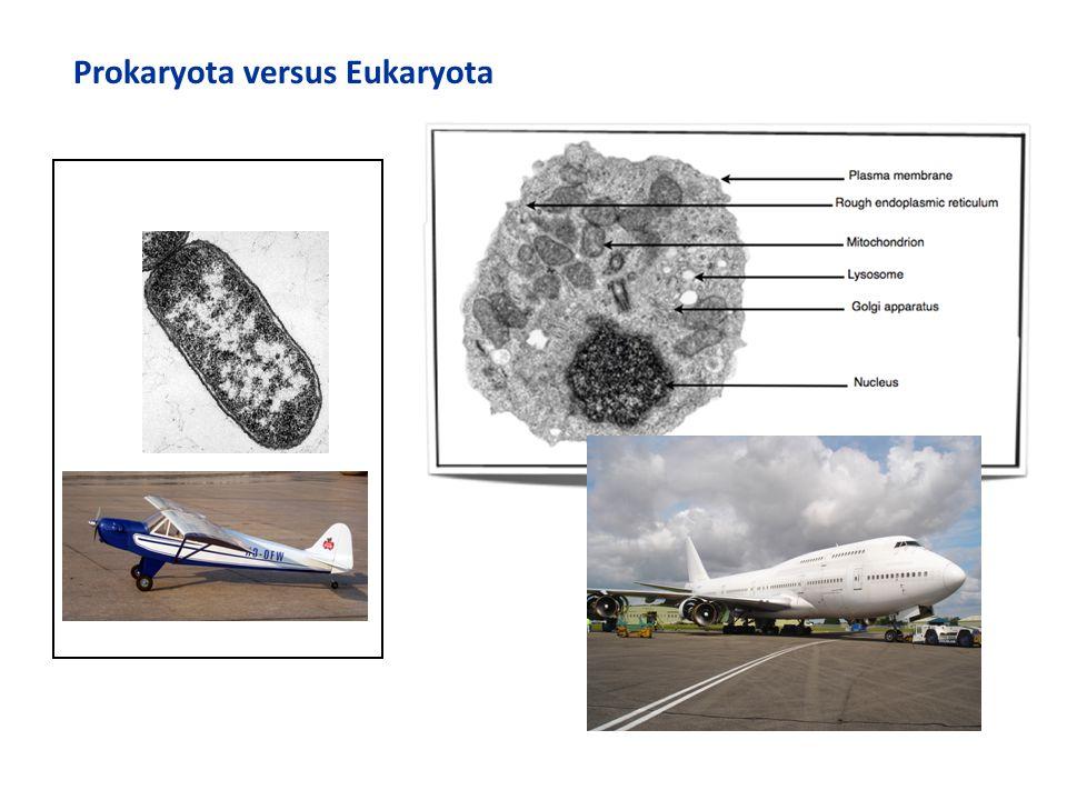 Prokaryota versus Eukaryota