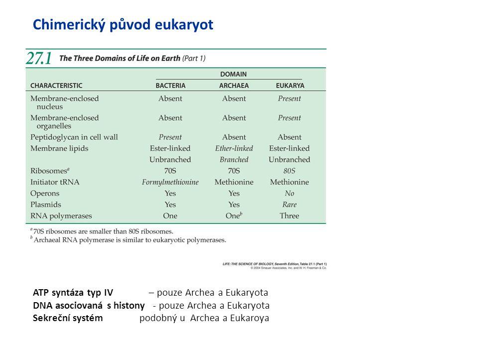 Chimerický původ eukaryot