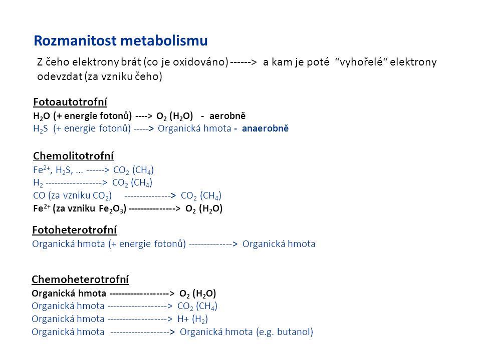 Rozmanitost metabolismu