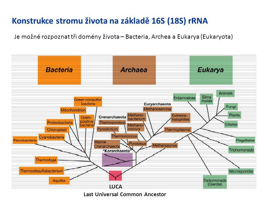 Konstrukce stromu života na základě 16S (18S) rRNA