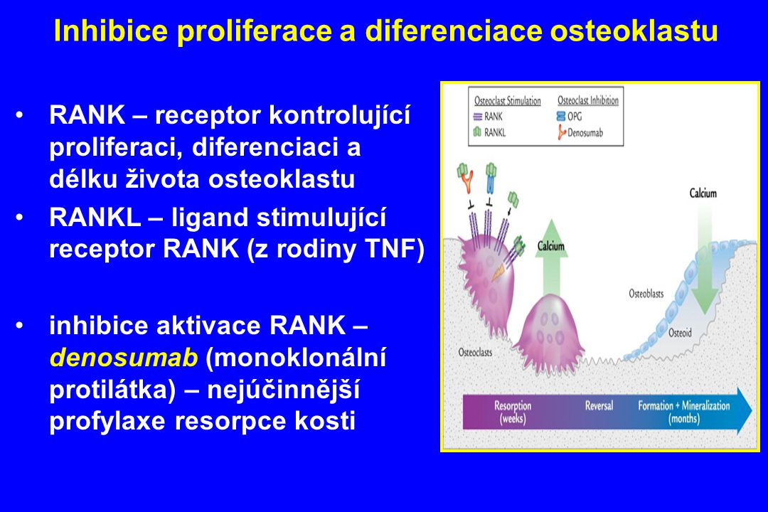 Inhibice proliferace a diferenciace osteoklastu