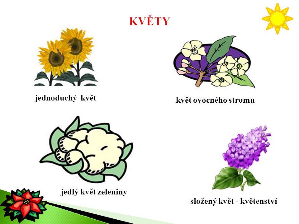 KVĚTY jednoduchý květ květ ovocného stromu jedlý květ zeleniny