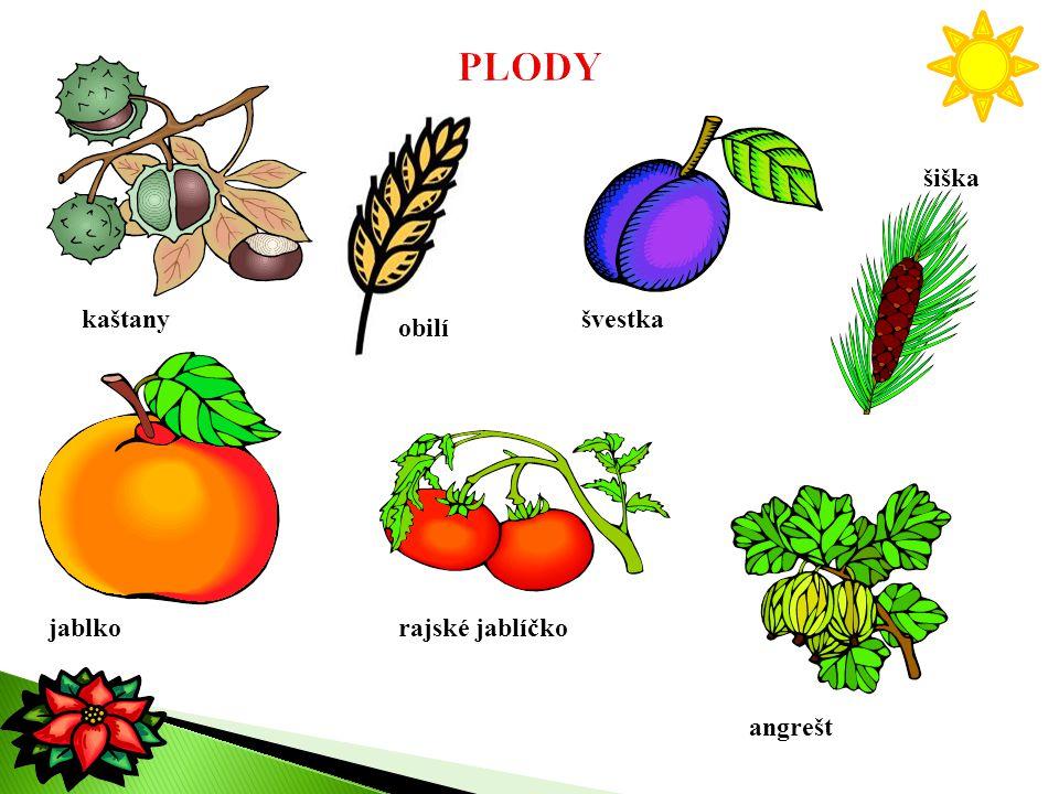 PLODY šiška kaštany švestka obilí jablko rajské jablíčko angrešt