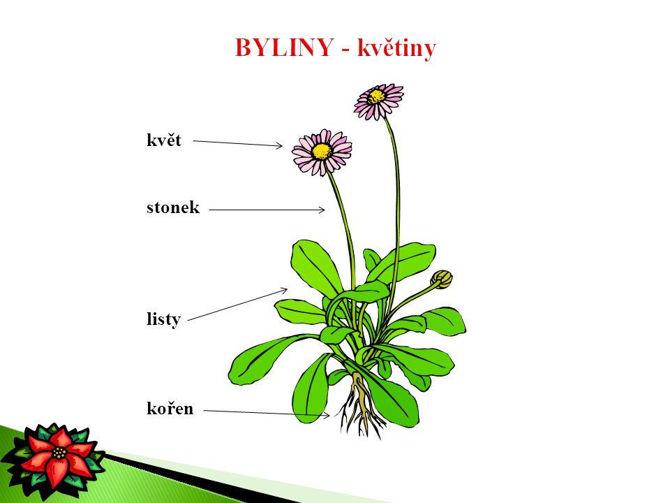 BYLINY - květiny květ stonek listy kořen