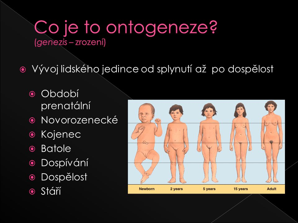 Co je to ontogeneze (genezis – zrození)
