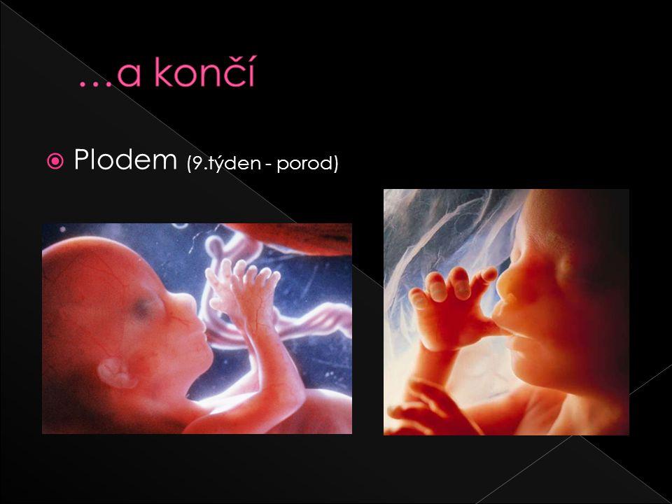 …a končí Plodem (9.týden - porod)