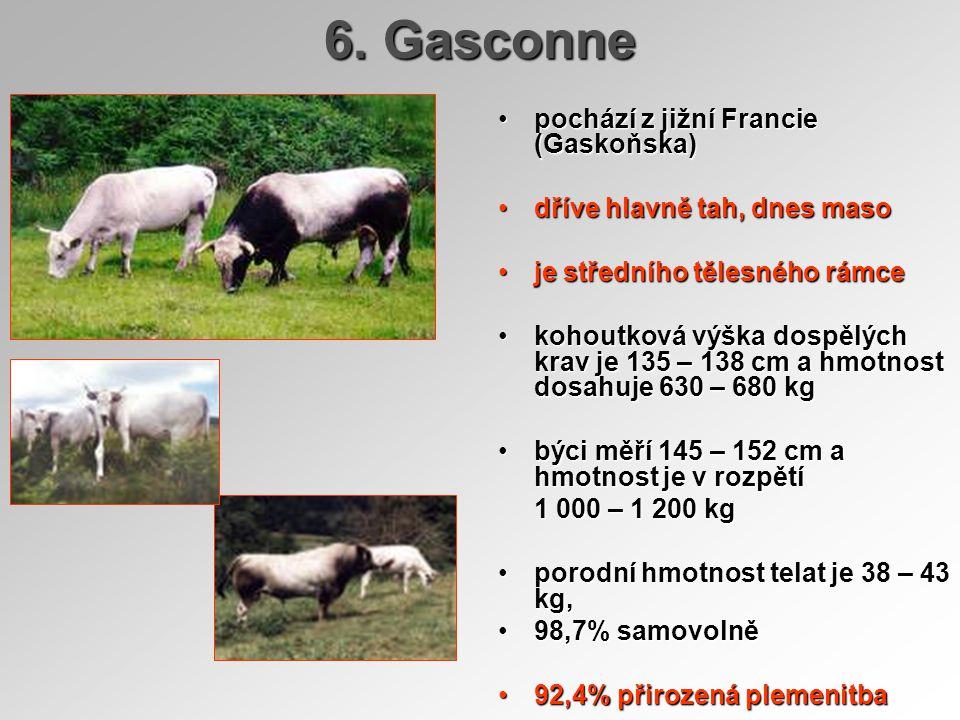 6. Gasconne pochází z jižní Francie (Gaskoňska)