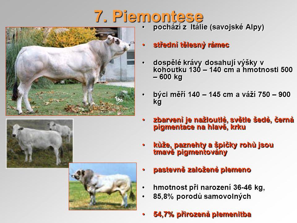 7. Piemontese pochází z Itálie (savojské Alpy) střední tělesný rámec