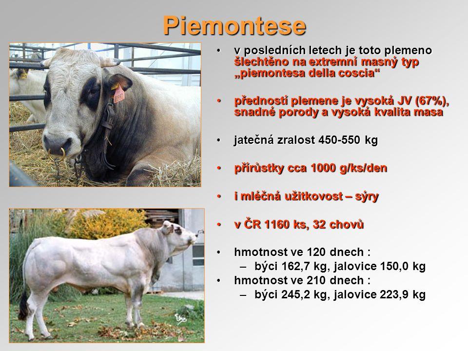 """Piemontese v posledních letech je toto plemeno šlechtěno na extremní masný typ """"piemontesa della coscia"""