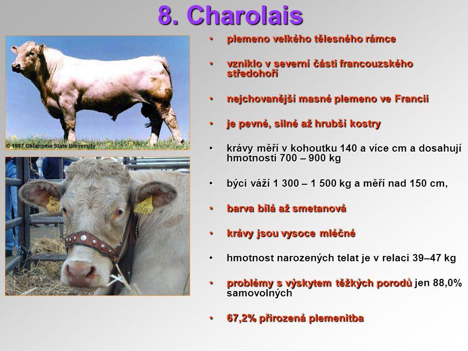 8. Charolais plemeno velkého tělesného rámce