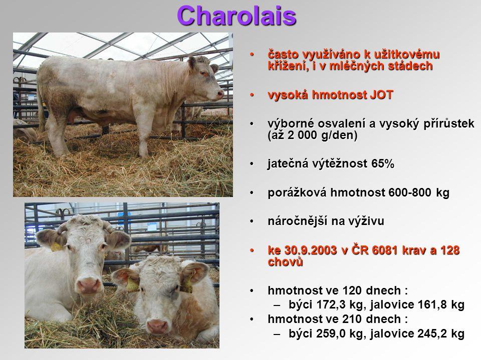 Charolais často využíváno k užitkovému křížení, i v mléčných stádech
