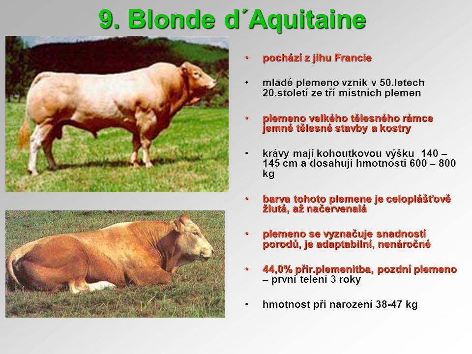 9. Blonde d´Aquitaine pochází z jihu Francie