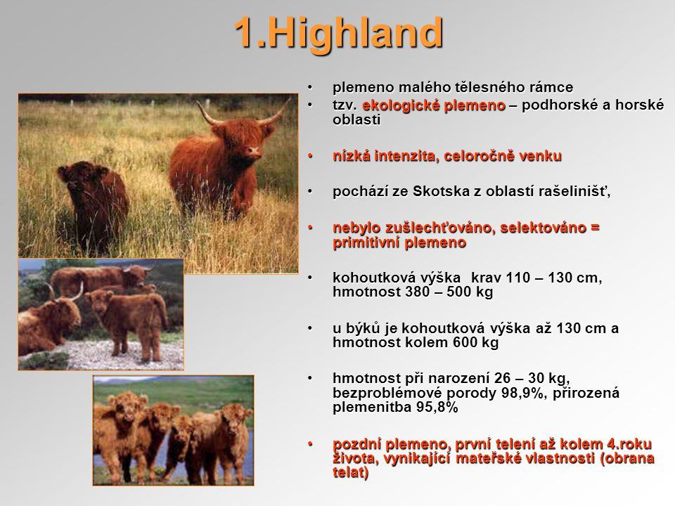 1.Highland plemeno malého tělesného rámce