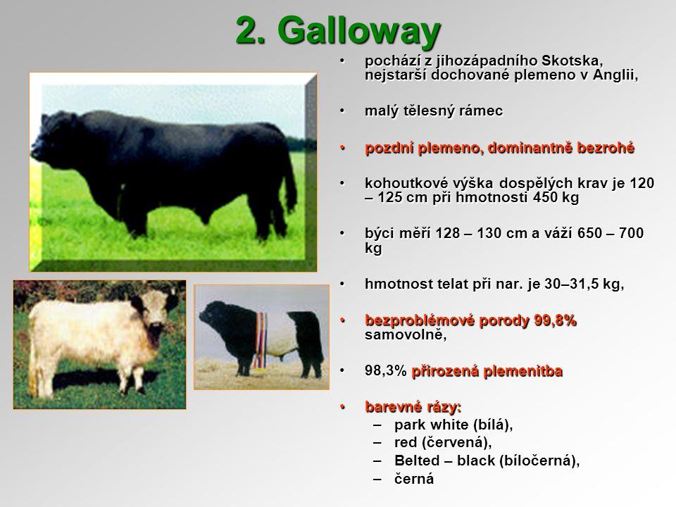 2. Galloway pochází z jihozápadního Skotska, nejstarší dochované plemeno v Anglii, malý tělesný rámec.