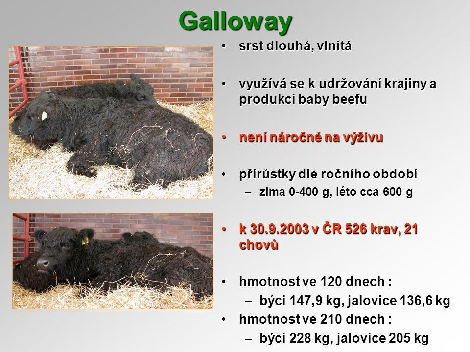Galloway srst dlouhá, vlnitá