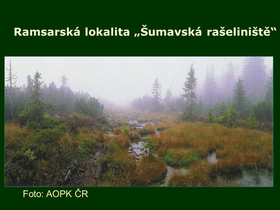 """Ramsarská lokalita """"Šumavská rašeliniště"""